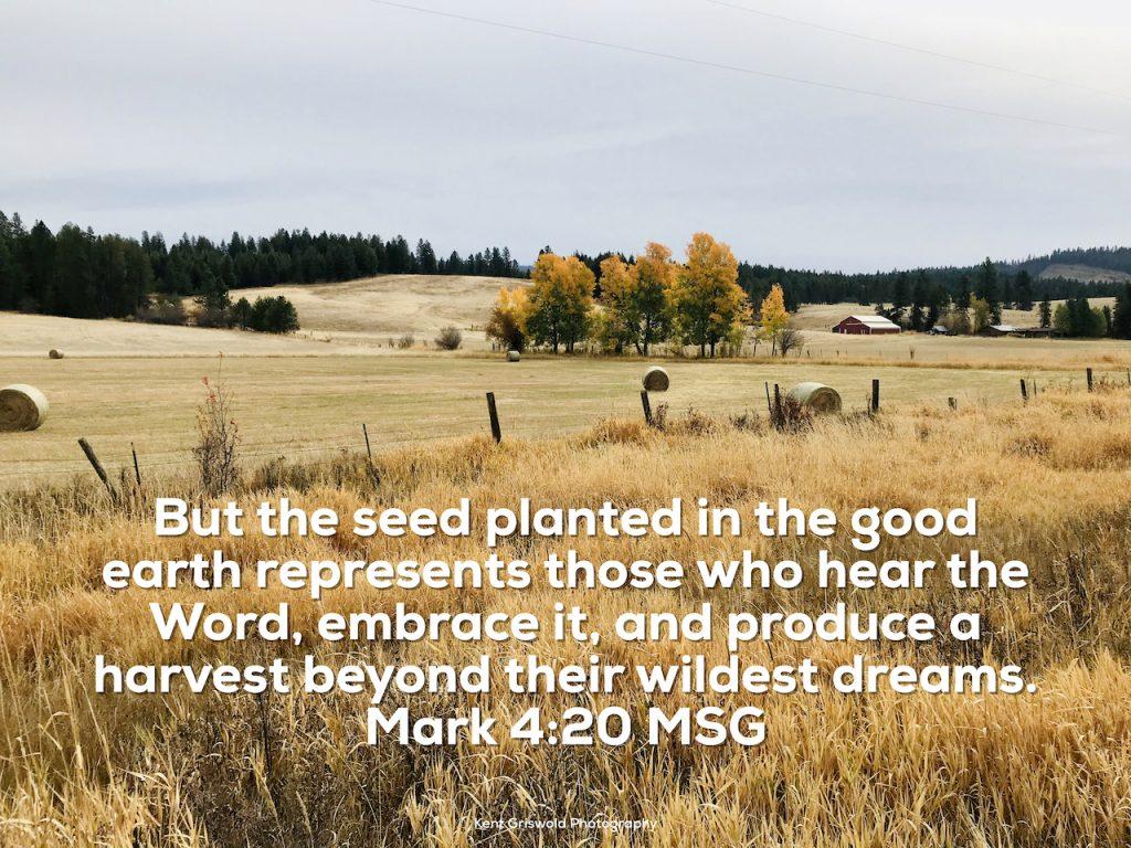 Harvest - Mark 4:20