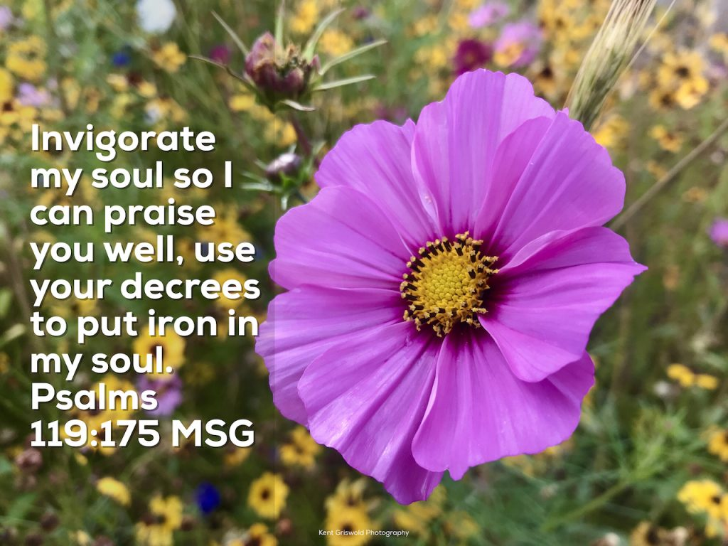 Praise - Psalms 119:175