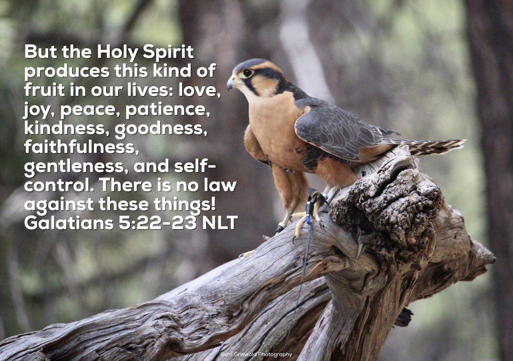 Fruit - Galatians 5:22-23