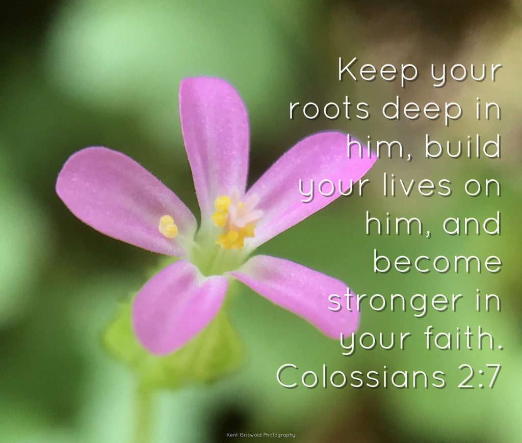 Roots - Colossians 2:7