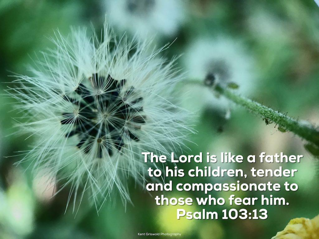 Tender - Psalm 103:13