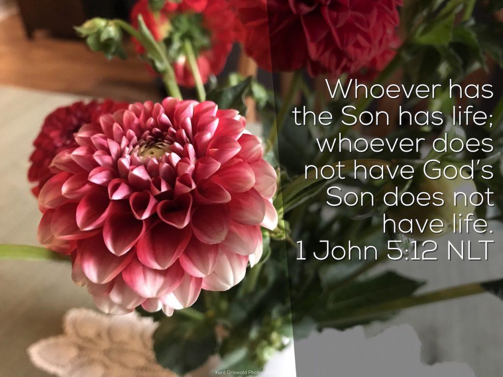 Life - 1 John 5:12
