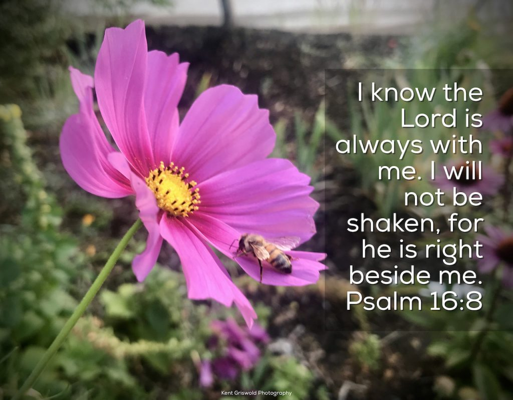 Shaken - Psalm 16:8